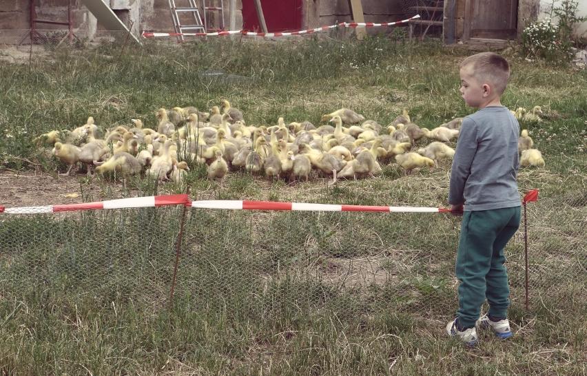 Der Büdenhof – Gemeinschaftlich Leben auf dem Bauernhof