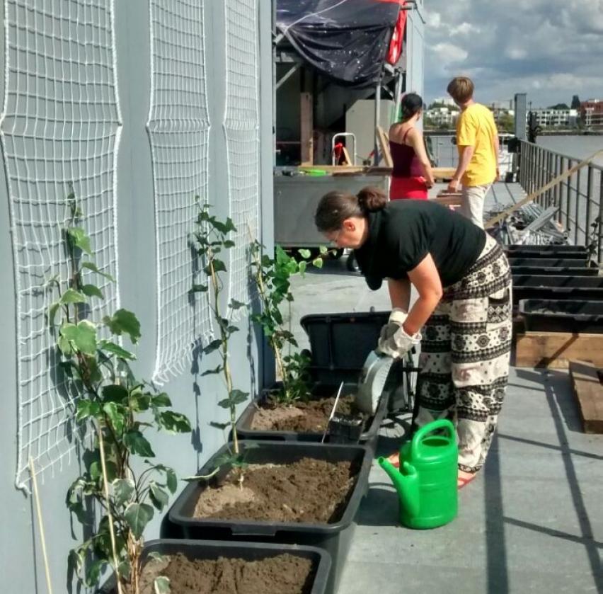 Foto: Bewohnerin beim Tomaten pflanzen
