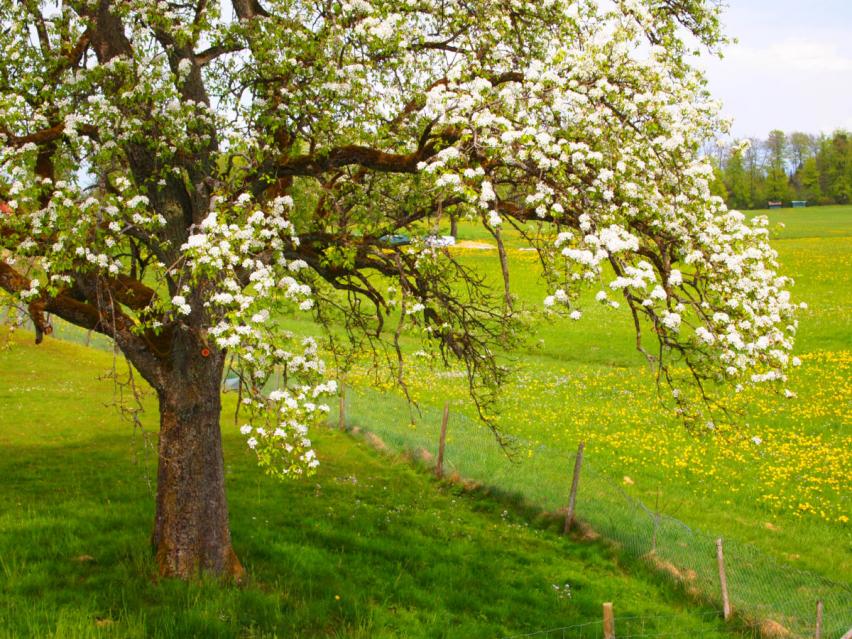 Cohousing Bodensee – Beratung für Gemeinschaften – bring-together